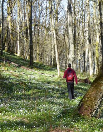Unberührte Natur im Frühling