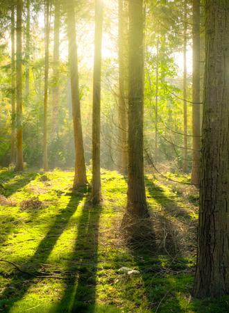 Sonnenlicht durchflutet einen Wald